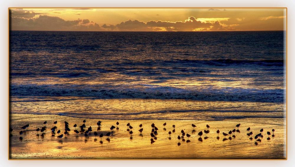 photoblog image On golden beach
