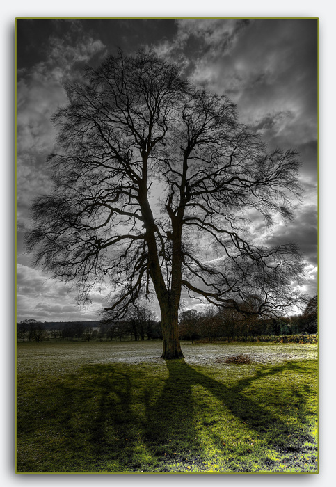 photoblog image Shugborough tree