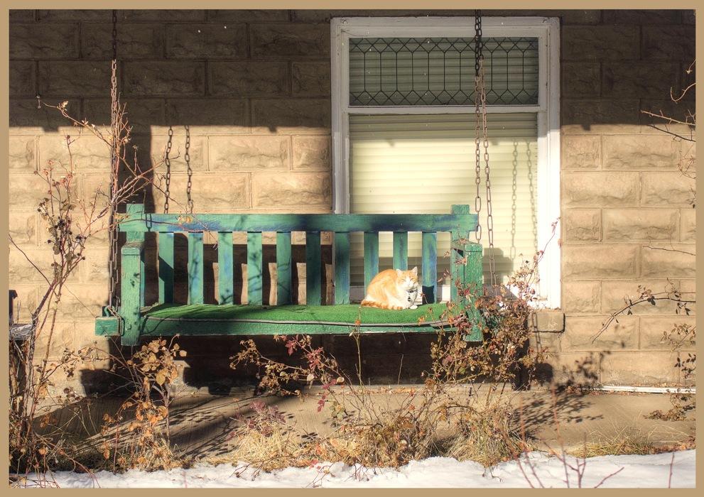 photoblog image Cats home...