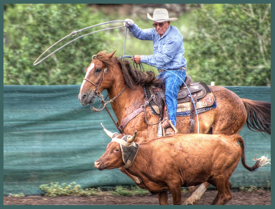 photoblog image Just a ropin' in the rain....