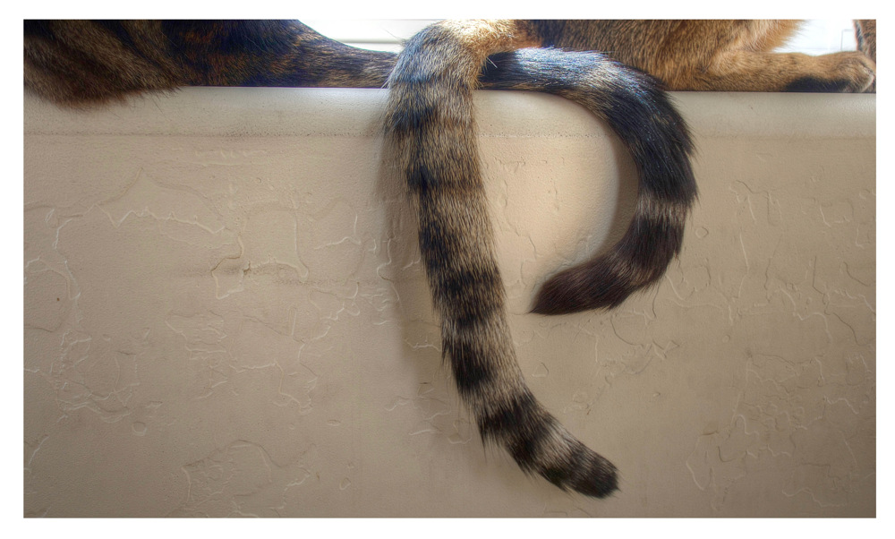 photoblog image Tails to tell...