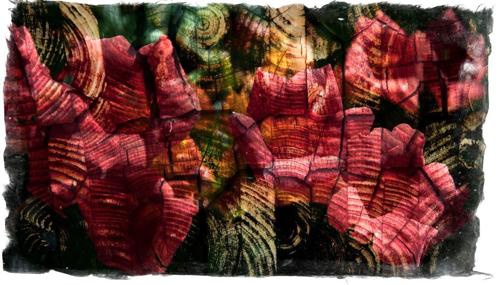 photoblog image Wooden petals